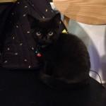 細細隻小黑貓